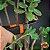Estilete de Jardinagem do Jardineiro Amador - Imagem 5