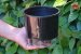 Kit Vasos Autoirrigáveis - Imagem 2