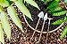 Kit Para Plantar Bonsai - Imagem 2