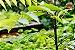 Kit Para Plantar Bonsai - Imagem 4