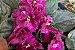 Kit Para Plantar Violetas - Imagem 6