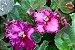 Kit Para Plantar Violetas - Imagem 8