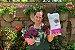 Kit Para Plantar Violetas - Imagem 2