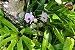 Kit para plantar Orquídeas na árvore - Imagem 3