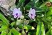 Kit para plantar Orquídeas na árvore - Imagem 2