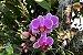 Kit para plantar Orquídeas na árvore - Imagem 5