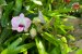 Kit para plantar Orquídeas na árvore - Imagem 4