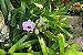 Kit para plantar Orquídeas na árvore - Imagem 6