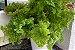 Kit Para Plantar Samambaias - Imagem 3