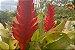 Kit Para Plantar Bromélia - Imagem 5