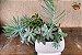 Kit Para Plantar Cactos e Suculentas em Vaso - Imagem 8