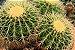 Kit Para Plantar Cactos e Suculentas em Vaso - Imagem 5