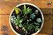 Kit Para Plantar Cactos e Suculentas em Vaso - Imagem 7