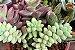 Kit Para Plantar Cactos e Suculentas em Vaso - Imagem 4