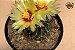 Kit Para Plantar Cactos e Suculentas em Vaso - Imagem 10