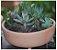 Vaso Para Suculentas do Jardineiro Amador  - Imagem 5