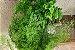 Kit Para Plantar Avencas - Imagem 5