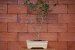 Vaso Retangular para Bonsai - Imagem 6