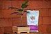Vaso Retangular para Bonsai - Imagem 7