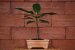 Vaso Retangular para Bonsai - Imagem 8