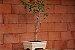 Vaso Retangular para Bonsai - Imagem 4