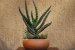 Vaso Redondo para Cactos e Suculentas - Imagem 7