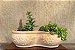 Vaso duplo para Cactos e Suculentas - Imagem 2