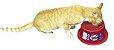 Comedouro Alto para Gatos Super Cat  - Imagem 4