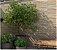 Revestimento Esmaltado 32,5X56,5 T.01 LT.1811 2,21MT HD34730 Incefra - Imagem 2