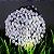 Pisca Pisca Branco Cordão 100 Lâmpadas 127v Led 8 Funções 10m - Imagem 1