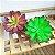 Kit 3 Plantas Suculenta Lótus Artificial 16x10 Cm Decoração - Imagem 3