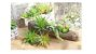 Kit 3 Plantas Suculenta Artificial Ornamental 18cm Decoração - Imagem 2