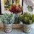 Jogo Com 3 Plantas Artificial Suculenta 20 Cm Decoração Casa Jardim - Imagem 1