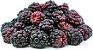 Boysenberry - Imagem 1