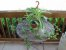 Callisia fragrans - Imagem 4