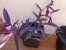 Trapoeraba roxa (Tradescantia pallida purpurea) - Imagem 2