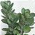 Kalanchoe laxiflora var. violácea - Imagem 2