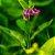 Chá de Confrey 30 g - Imagem 3