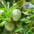 Chá de Passiflora (Maracujá) 30 g - Imagem 3