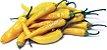 Pimenta Cayenne Amarela (EXCLUSIVIDADE) : 20 Sementes - Imagem 3