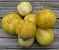 Pepino Limão (Lemon): 15 Sementes - Imagem 8