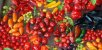 Pimentas Sortidas: 100 Sementes - Imagem 3