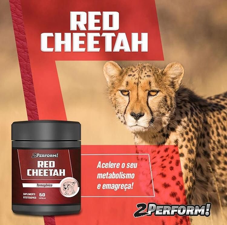 Red Cheetah |  Termogênico