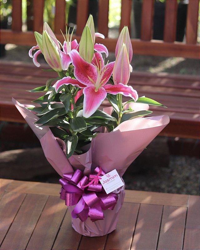 Lírio Oriental Rosa Perfumado Luxo
