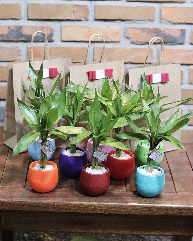 Bambu da Sorte em vaso colorido plástico  (3 hastes)