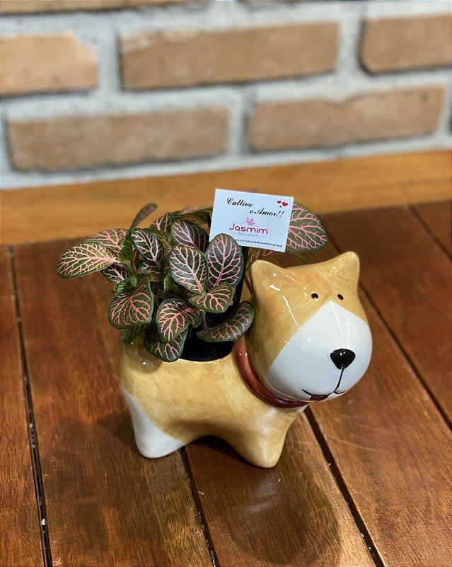 Cachorro Louça  Amarelo P + Fitônia