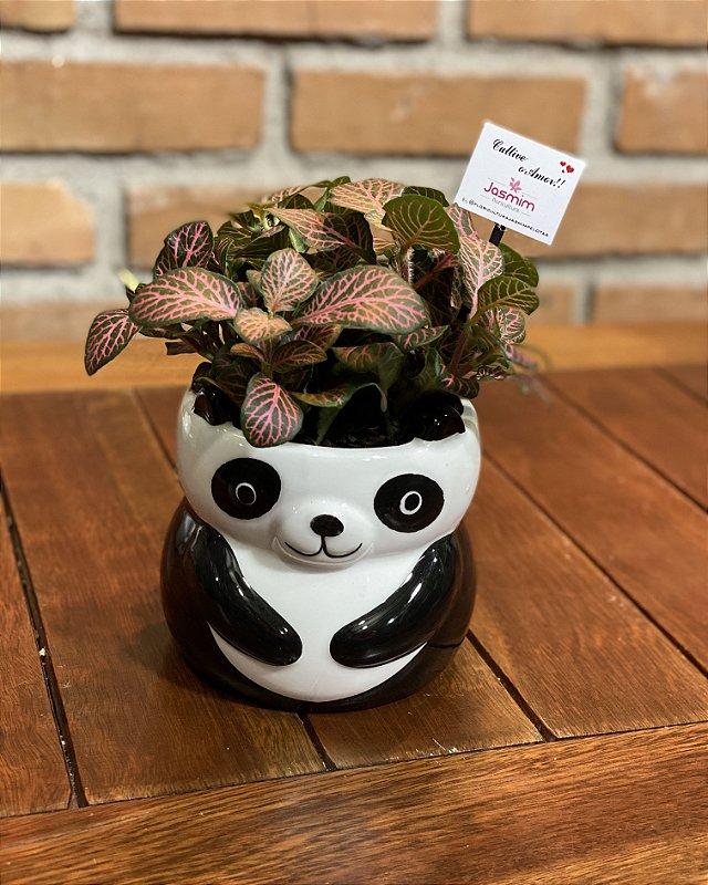 Vaso Louça Panda + Fitônia