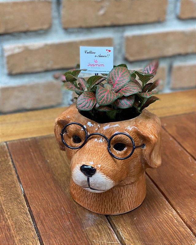 Vaso de Louça Cachorro de óculos + Fitônia