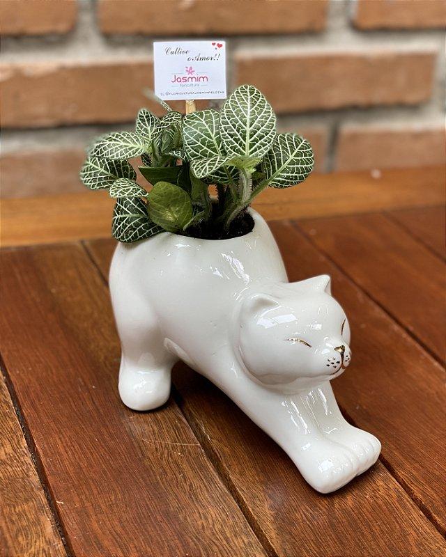 Gato Preguiça de Louça + Fitônia