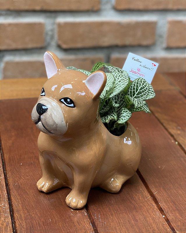 Vaso de Louça Dog sentado + Fitônia